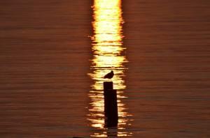 Tramonto al lago - Ferdinando Maino